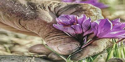 persian saffron is the best